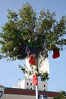 Stockings In Tree.7856